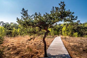 Heidekrautbaum von Maico.O