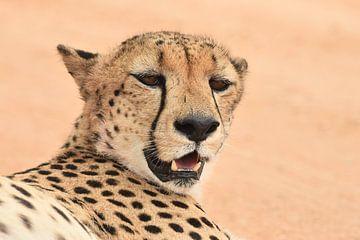 Jachtluipaard (cheeta) van Frank Heinen