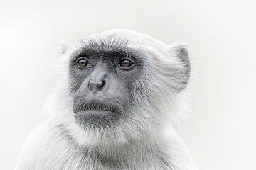Langoer aap sur Ron Meijer