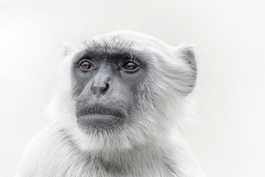 Apen portret van Ron Meijer