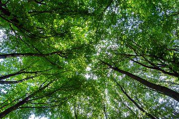 Wald von Johan Buitelaar