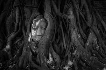 Boedha in boom van Jesse Kraal