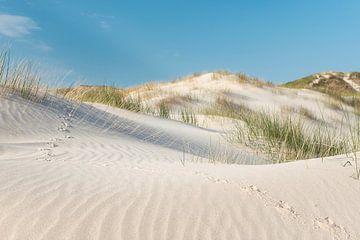 Vogelspuren im Sand zwischen Strandhafer von Fotografie Egmond