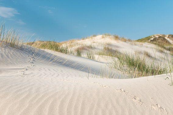Vogelsporen in zand tussen helmgras