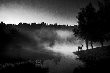 Im Morgengrauen........ von Wim Schuurmans
