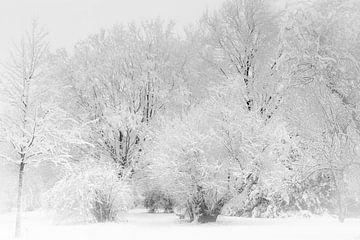 Koning Winter von Mario Brussé Fotografie