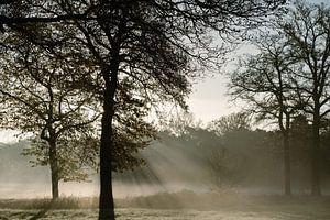 Ochtend mist op het platteland van Wianda Bongen