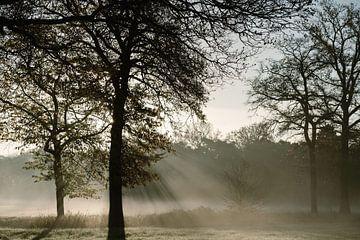 Morgennebel auf dem Land von Wianda Bongen