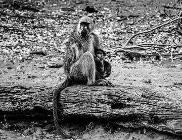 Mama aap met baby von Marit van de Klok