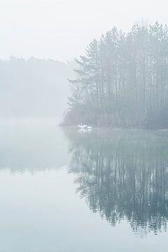 Schwanenpaar in einem Teich an einem nebligen Morgen von Karin de Jonge