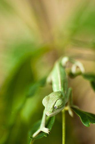 Kameleon van Ralph van Krimpen