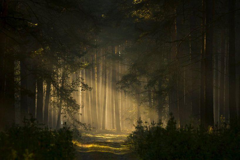 Im Märchenwald von Heiko Lehmann