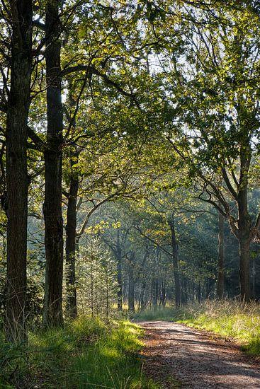 Licht in het bos