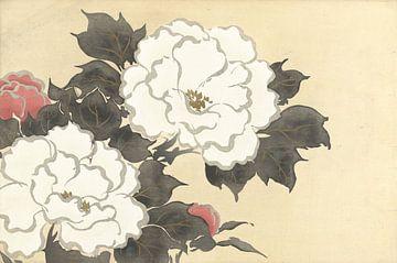 Pfingstrosen von Kamisaka Sekka, 1909