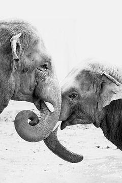 Elefanten lieben von Evelien Oerlemans