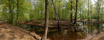 Bosgezicht met vijver in Spanderswoud in 's-Graveland van Martin Stevens