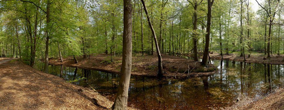 Bosgezicht met vijver in Spanderswoud in 's-Graveland