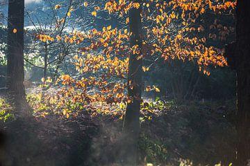 Sonnenlicht auf Blättern von Etienne Oldeman
