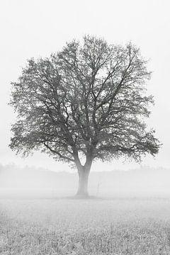 Mächtiger Baum von E Blaas