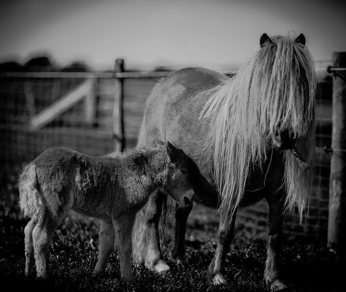 Ponies, moeder met veulen in zwart-wit van Atelier Liesjes