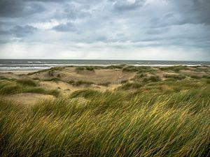 L'herbe des dunes dans le vent