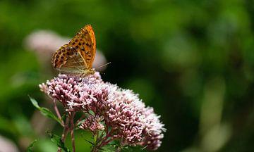 Schmetterling von Eric Sweijen