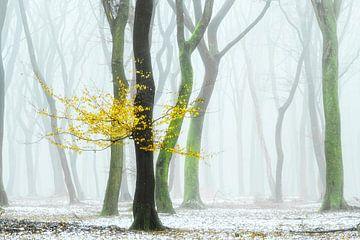 Ein wenig Gelb von Lars van de Goor