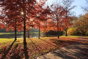 Herfst in het Vondelpark van