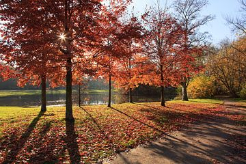 Herfst in het Vondelpark