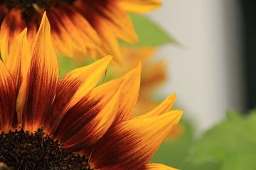 Sunny Flower van