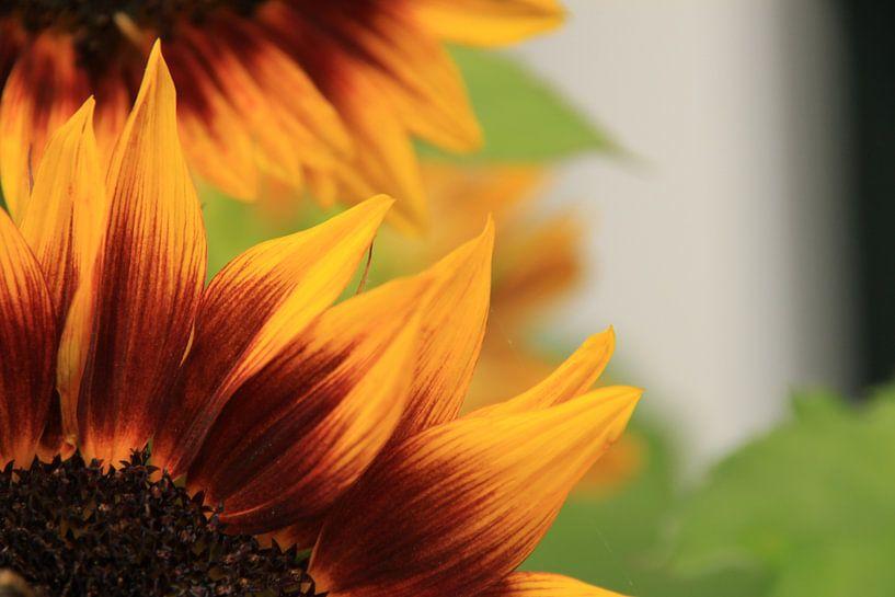 Sunny Flower van Marcel van Rijn