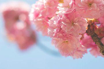 Roze bloesem in de lente van Jeantina Lensen-Jansen