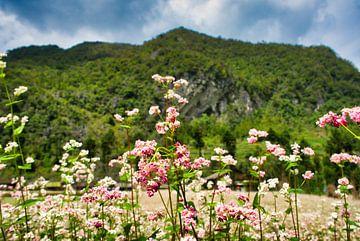 Fleurs roses sous la montagne sur Bart Nikkels