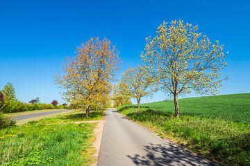Landschaft mit Straße und Bäumen bei Kuchelmiß von Rico Ködder