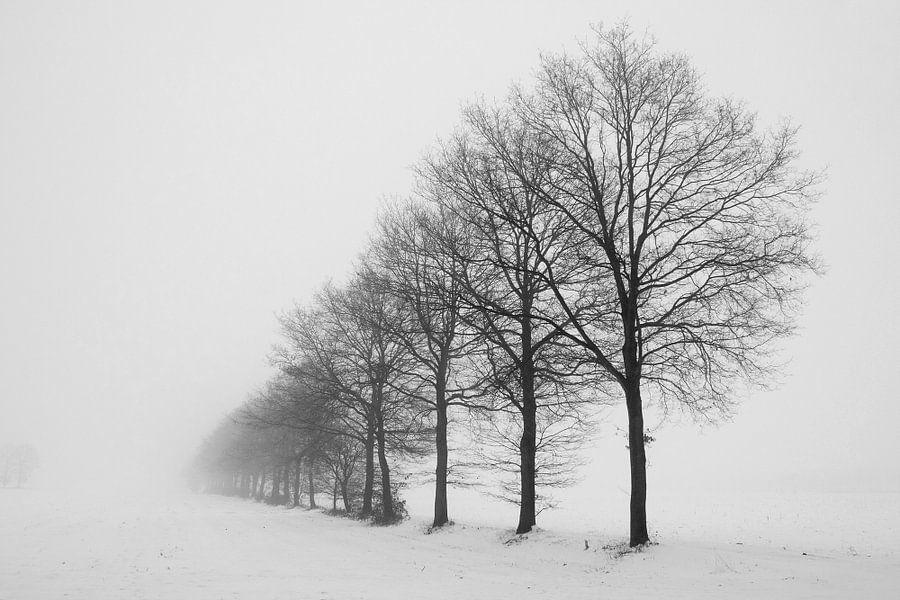 De mist in van Gert Hilbink