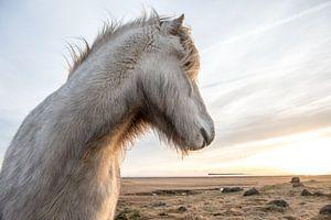 IJslander in de winter