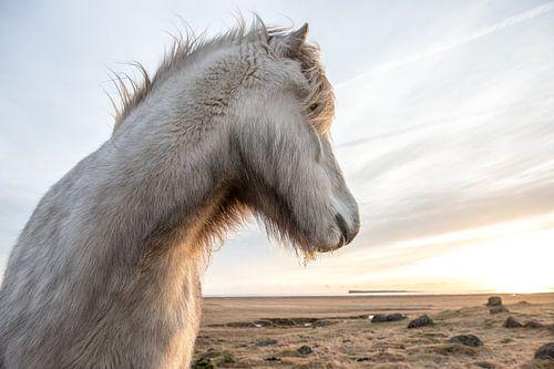IJslander in de winter van Inge Jansen