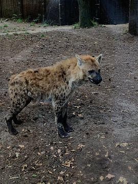 Hyena van Lois Metzelaar