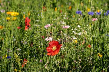 Wilde bloemenweide van Uwe Ulrich Grün