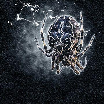 Spin in de regen van Fotografie Jeronimo
