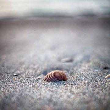 Shell on the Beach Ouddorp sur Rob van der Teen