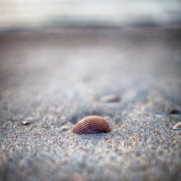 Schelp op het Strand van Ouddorp