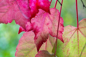 herfstblad van wilma ten Bhömer