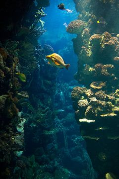 Aquarium von Veronique Kriesch