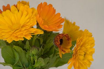 Goldgelbe und orangefarbene Ringelblume blüht im April von J..M de Jong-Jansen