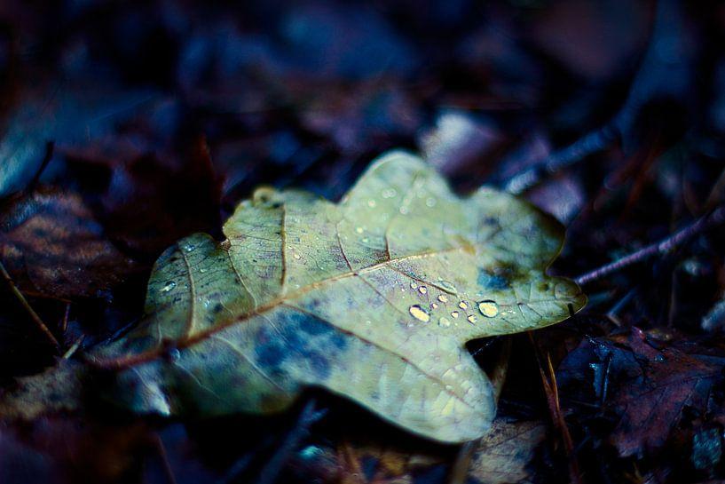herfstblad met druppels van Marloes Hoekema