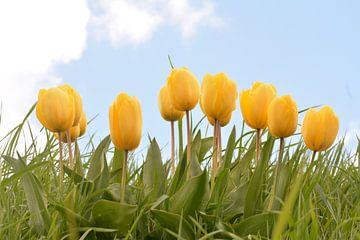 Wuivende Tulpen deel II van Klaas Dozeman