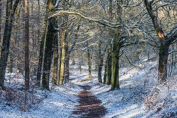 Pad door sneeuw in het bos
