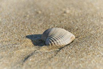 Schelp op het strand van Ad Jekel
