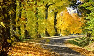 Auch der Herbst zeigt seine Schönheit van